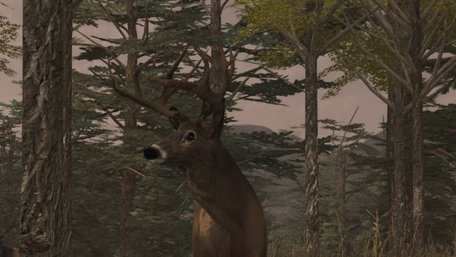 Deer Simulator Trailer Screenshot