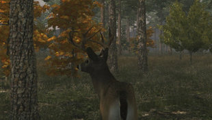 Deer Simulator Screenshot 2