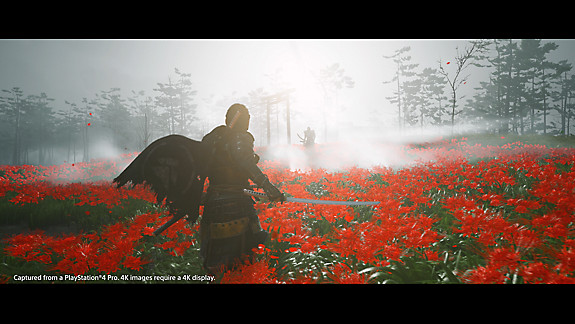 A man with his sword walking through a field of red flowers.