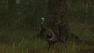 Wild Turkey Hunter Screenshot 5