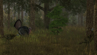 Wild Turkey Hunter Screenshot 8