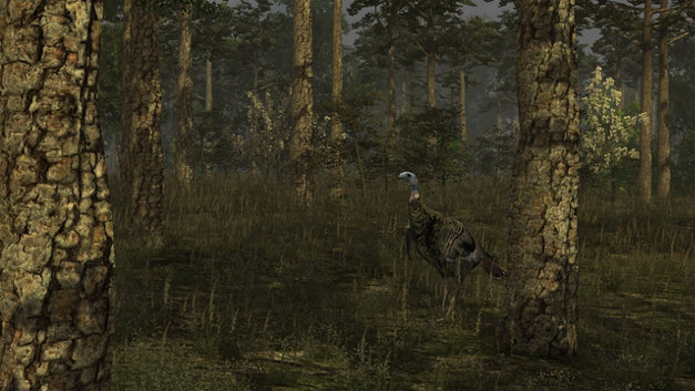 Wild Turkey Hunter Screenshot 1